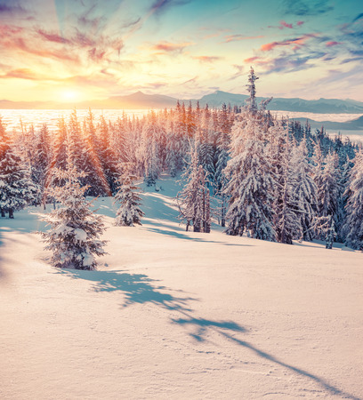 winter sunrise: Colorful winter sunrise in the snowy mountains.  Stock Photo