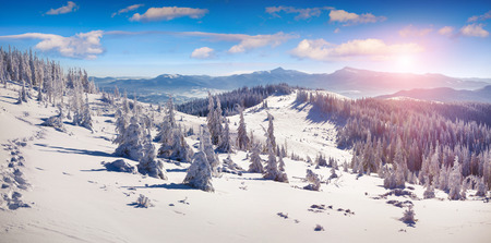 snowy mountains: Colorful winter panorama of the snowy mountains. Fresh snow at frosty morning glowing first sunlight.