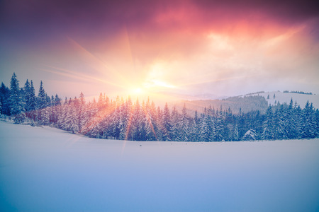 Colorful winter scene in the Carpathian mountains.