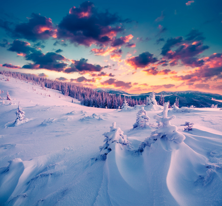 majestic: Colorful winter scene in the Carpathian mountains.
