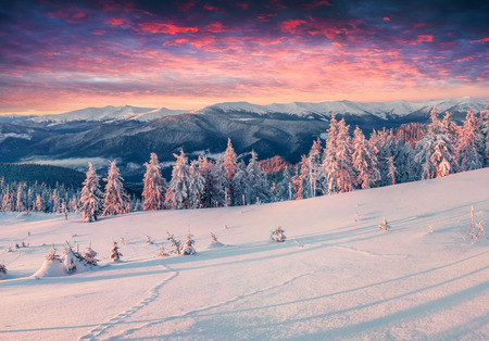 montañas nevadas: amanecer de invierno colorido en las montañas nevadas.