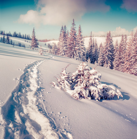 treck: Sunny winter landscape in the mountain forest. Instagram toning.