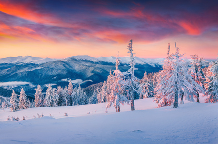 snowy mountains: Colorful winter sunrise in the snowy mountains. Fresh snow at frosty morning glowing first sunlight.