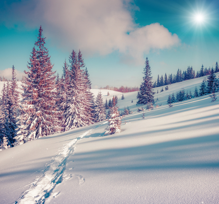 treck: Sunny winter landscape in the mountain forest.