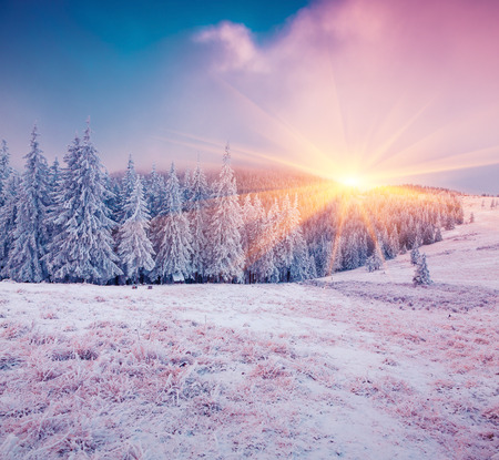 winter sunrise: Colorful winter sunrise in the mountain forest.