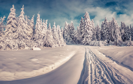 sunlight: Snowy winter road in the mountain road.  Stock Photo
