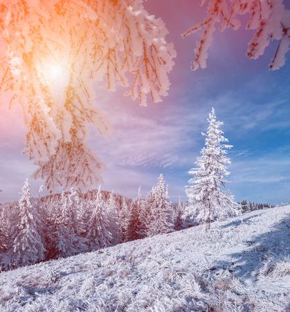 winter sunrise: Colorful winter sunrise in the mountain foerest.