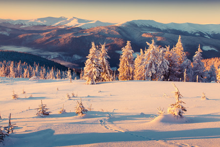 winter sunrise: Sunny morning sunrise in the winter mountain. Retro style.
