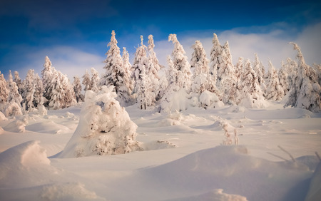 suny: Trees covered with hoarfrost and snow in suny mountains Stock Photo