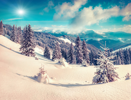 amazing stunning: Suny winter scene in the mountain forest. Instagram toning.