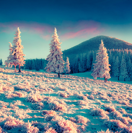 amazing stunning: First frost in the misty mountain valley. Instagram toning. Stock Photo