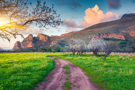 Fioritura di mandorlato sul capo San Vito, clima morbido mediterraneo in Sicilia, Italia, Europa. Archivio Fotografico - 50388766