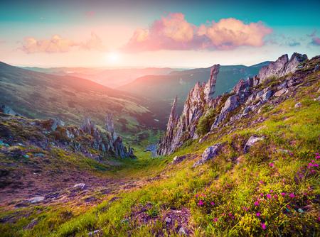 wonderful: Colorful summer sunrise in the Carpathian mountains. Subalpine meadow Gadzhina view from Shpytsi mountain, Ukraine, Europe. Instagram toning.