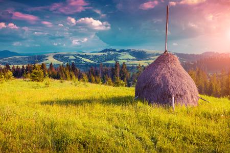 haymaking: Haymaking in a Carpathian village. Ukraine, Europe. Instagram toning. Stock Photo