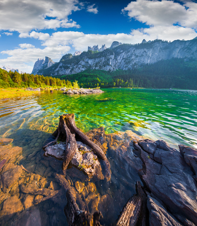 Old roots in the pure water of  Vorderer Gosausee lake in the Austrian Alps. Austria, Europe. Wide angl.