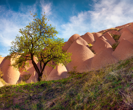 undulate: Lonely tree against the backdrop of bizarre sandstone undulate of Cappadocia. Morning in famous Uchisar village, district of Nevsehir Province in the Central Anatolia Region of Turkey, Asia. Stock Photo