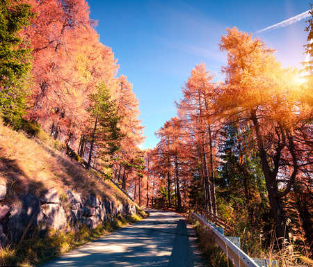 Colorful morning view in larch forest. Sunny autumn scene in Dolomite Alps, Cortina dAmpezzo location, Italy, Europe. Artistic style post processed photo.