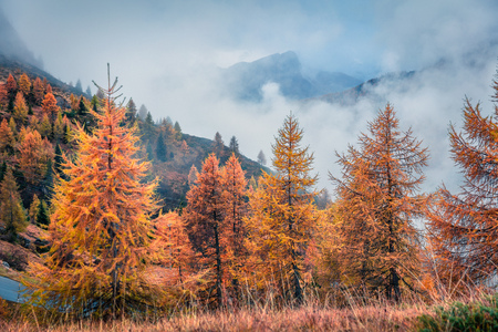 Fantastic foggy view of Dolomite Alps with yellow larch trees. Colorful autumn scene in mountains. Giau pass location, Italy, Europe.