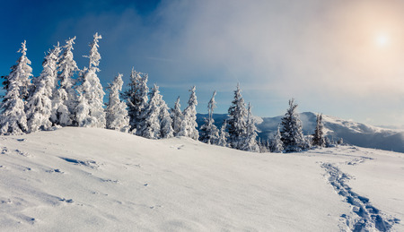 treck: Sunny morning scene in the mountain forest. Bright winter landscape in the snowy wood, Happy New Year celebration concept. Artistic style post processed photo. Stock Photo