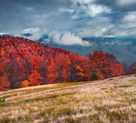 Colorful autumn scene on the Svydovets mountain range in Carpathian mountains. Splendid morning view near the mountain forest. Artistic style post processed photo. Stock Photo