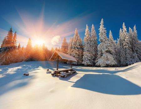 포리스트의 다채로운 겨울 일출입니다. 산에서 화려한 크리스마스 장면입니다. 예술적 스타일 게시물 처리 된 사진입니다.