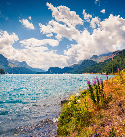Summer sunny view in Swiss Alps. Colorful outdoor scene on Sils lake under deep blue sky, Maloja pass, Upper Engadine in canton of the Grisons, Switzerland