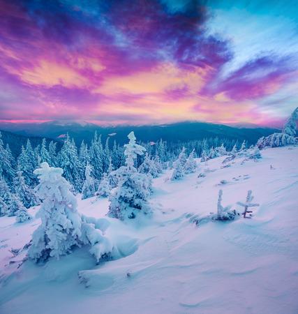 Alba invernale incredibile in montagne carpatiche con abeti innevati. Scena all'aperto variopinto, concetto di celebrazione del buon anno. Foto elaborata post stile artistico.