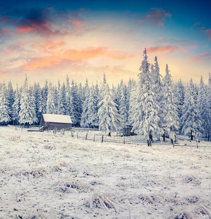 カルパチアの幻想的な冬の日の出雪で放棄された村は草とモミの木を覆われています。美しい屋外シーン、新年あけましておめでとうございますお