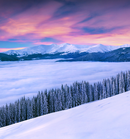 vivid winter sunrise in Carpathian mountains with snow covered fir trees. Great outdoor scene, Happy New Year celebration concept. Artistic style post processed photo. Stock Photo