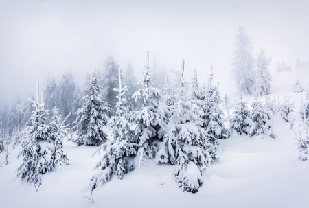 Foggy winter morning in Carpathian mountains with snow covered fir trees. Great outdoor scene, Happy New Year celebration concept. Artistic style post processed photo. Stock Photo - 88599510