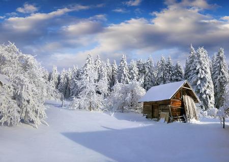 Manhã ensolarada do inverno na vila Carpathian com as árvores cobertos de neve no jardim. Cena exterior colorida, conceito da celebração do ano novo feliz. Pós estilo artístico foto processada. Foto de archivo