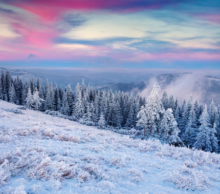 Unbelievable winter sunrise in Carpathian mountains with snow covered fir trees and grass. Colorful outdoor scene, Happy New Year celebration concept. Artistic style post processed.