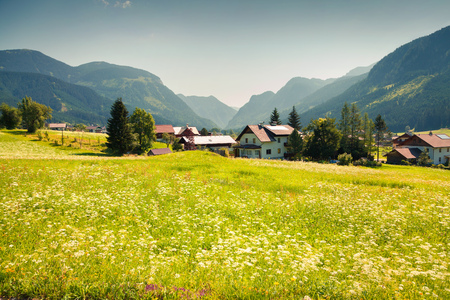 Colorful outdoor scene in the Austrian Alps with a field of blossom flowers. Summer sunny day in the Gosau village, Austria, Europe. Soft green filter toned. Stock Photo