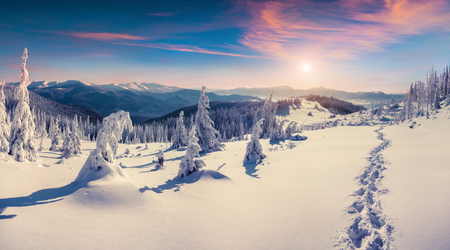 Gorgeous winter sunrise in Carpathian mountains with snow cowered trees. Colorful outdoor scene, Happy New Year celebration concept. Artistic style post processed photo.