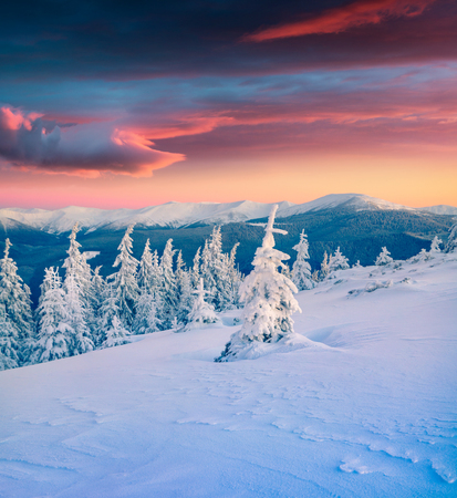 Incredible winter sunrisise in Carpathian mountains with fir trees covered a snow. Colorful outdoor scene, Happy New Year celebration concept. Artistic style post processed photo.