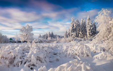 Picturesque winter landscape in the Carpathian village. Sunny outdoor scene in the garden after heavy snowfall, Happy New Year celebration concept. Artistic style post processed photo.