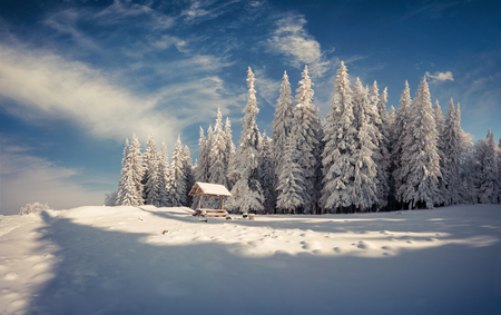 Winter morning after heavy snowfall in the mountain forest. Frosty outdoor view, Happy New Year celebration concept. Artistic style post processed photo. Stock Photo