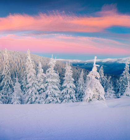 Great winter sunrise in Carpathian mountains with snow covered fir trees. Colorful outdoor scene, Happy New Year celebration concept. Artistic style post processed photo. 스톡 콘텐츠