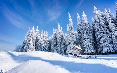 아름 다운 겨울 아침 산 숲에서 폭설 후. 서리가 내린 야외보기, 행복 한 새 해 축 하 개념. 예술적 스타일 게시물 처리 된 사진입니다. 스톡 콘텐츠