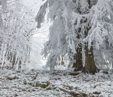 Wonderful winter landscape in snowy woods. Heavy frost on trees fnd ground in the mountain forest. Artistic style post processed photo. Stock Photo