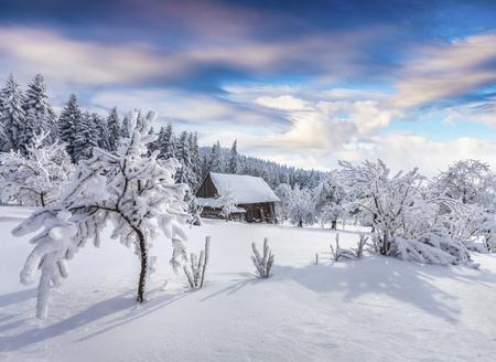 カルパチア村の晴れた冬の朝、庭の雪に覆われた木々。カラフルなアウトドアシーン、ハッピーニューイヤーのお祝いのコンセプト。アーティステ