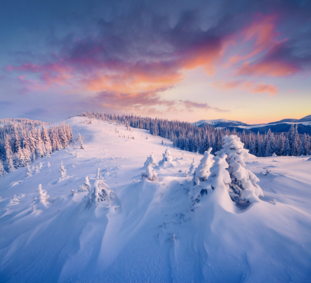 Marvelous winter sunrise in Carpathian mountains with snow covered fir trees. Colorful outdoor scene, Happy New Year celebration concept. Artistic style post processed photo.