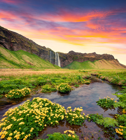Spectacular morning view of Seljalandfoss Waterfall on Seljalandsa river. Colorful summer sunrise in Iceland,  Europe. Artistic style post processed photo.