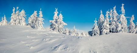 Panorama ensolarado da manhã na floresta da montanha. Paisagem de inverno brilhante na madeira nevada, conceito de celebração do Feliz Ano Novo. Fotografia artística com foto pós-processada. Foto de archivo