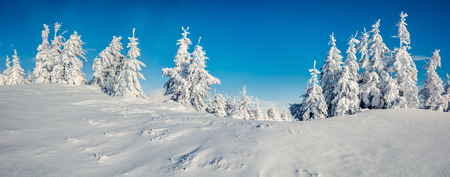 Sunny morning panorama in the mountain forest. Bright winter landscape in the snowy wood, Happy New Year celebration concept. Artistic style post processed photo. Фото со стока - 89420016
