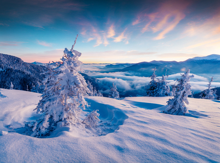 Dramatic winter sunrise in Carpathian mountains with snow covered fir trees. Colorful outdoor scene, Happy New Year celebration concept. Artistic style post processed photo. Stock Photo