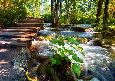 Scena d'estate pittoresca nel parco nazionale dei laghi di Plitvice. Insenatura dell'acqua pura in Croazia. Bellezza del fondo del concetto di natura. Foto elaborata post stile artistico.