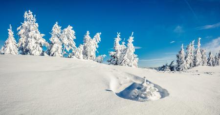 산 숲에서 맑은 아침 파노라마입니다. 눈 덮인 나무, 행복 한 새 해 축 하 개념에 밝은 겨울 풍경. 예술적 스타일 게시물 처리 된 사진입니다.