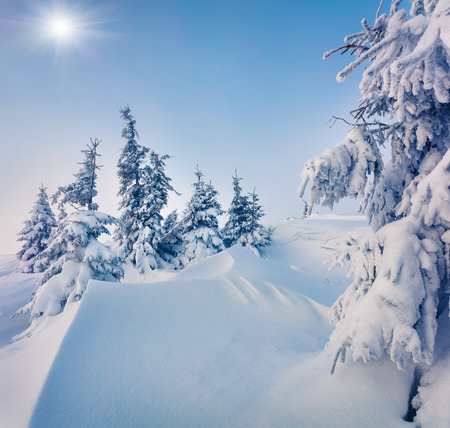 Sunny morning scene in the mountain forest after heavy snowfall. Misty winter landscape in the snowy wood, Happy New Year celebration concept. Artistic style post processed photo.