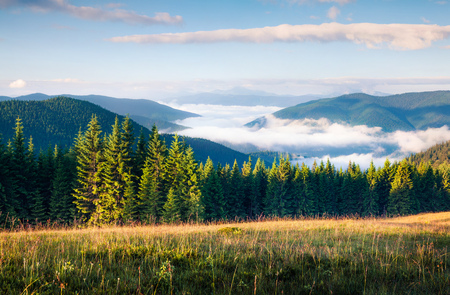 Great summer morning in the Carpathian mountains. Picturesque outdoor scene on the mountain valley in June, Ukraine, Tatariv village location, Europe. Beauty of nature concept background.